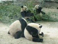 Kids_panda1